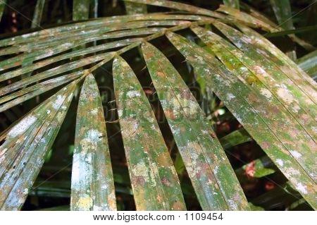 Leaf Flora