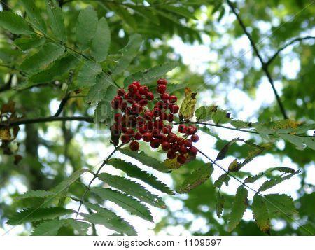 Berrys Beads