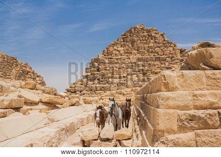 Three hourses in Giza