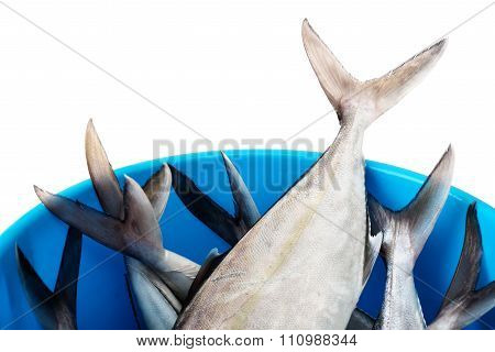 Bucket with fresh fish