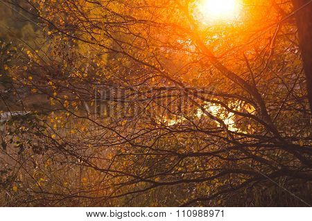 Warm sunlight in bush and branches