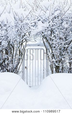 Small gate in hedgerow at winter