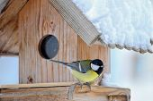 The Great tit bird (Parus major) on the wooden bird feeder with snow covering its roof during the Wi