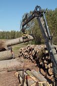 image of skidder  - Crane with jaws loading logs onto a stac - JPG