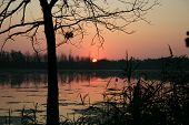 Sunset On The River In The Summer Through A Grass And Trees poster
