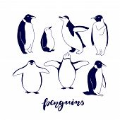 Постер, плакат: Hand Drawn Cartoon Penguins Isolated On White Background