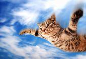 Постер, плакат: Летающие Смешные котята