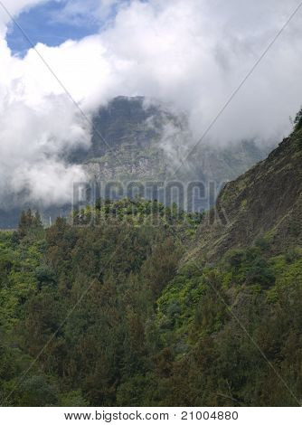 Reunion Island, The Forest Way To The Volcano