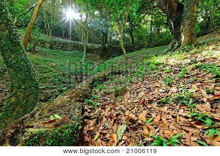 sunbeam shine through green forest