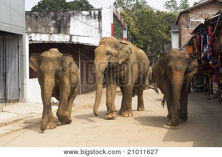 Elephants On The Srtreet