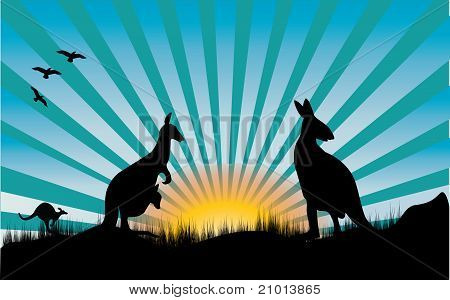 Kangaroo And Blue Rays