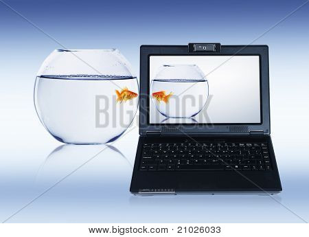 gold fish on notebook screen
