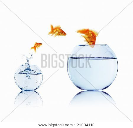 gold fish jumping out of water in fishbowl