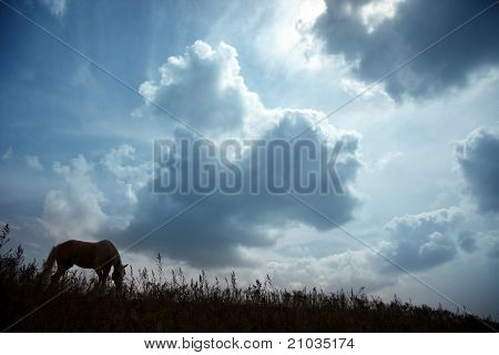 Horse At The Dark Sunset