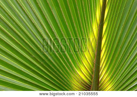 Palmetto Backgournd