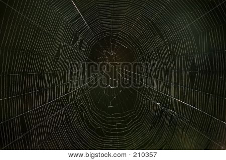 Spiders Web In The Dark