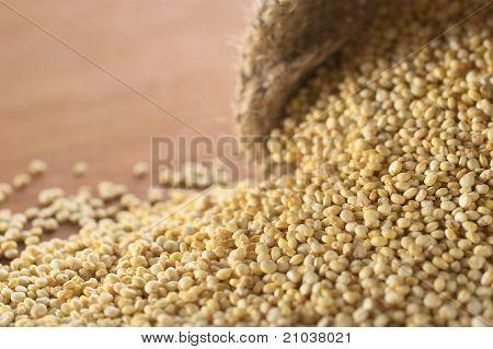 White Quinoa Grains