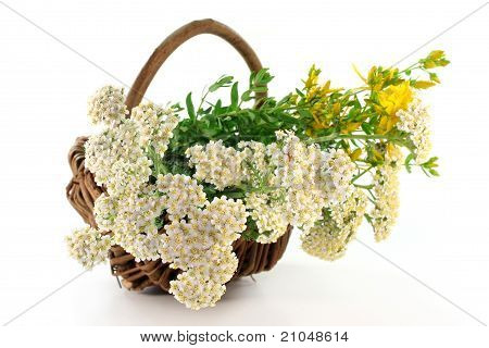Yarrow And St. John's Wort