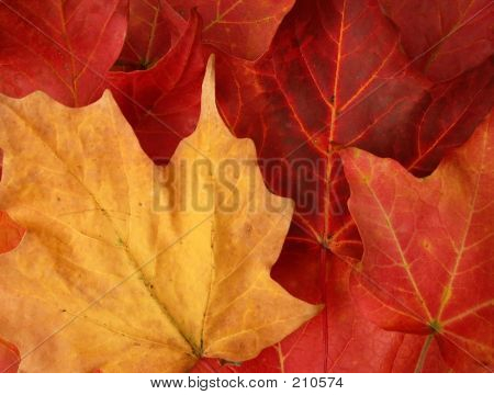 Fall  Leaves Horizontal