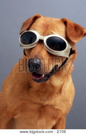 Hündchen Schutzbrillen