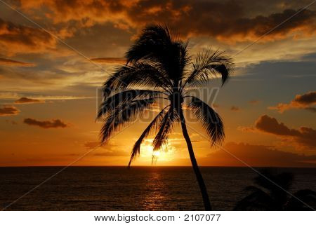 Palm Tree Silhouetted Against A Sunset Sky