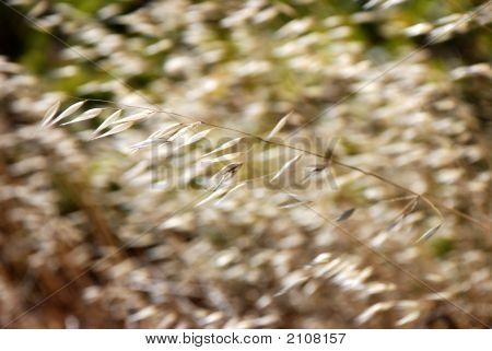 Grass_Wind2