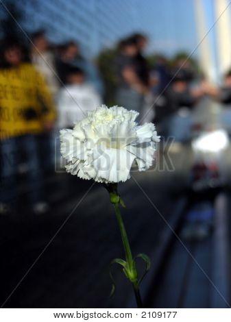 Vietnam Memorial _ Flower 1