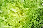 stock photo of escarole  - closeup of an escarole endive - JPG