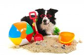 foto of toy dogs  - Portrait of a dog on vacation at the beach - JPG