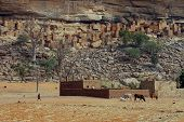 picture of dogon  - A Dogon child with cattle in front of a village at the base of the Bandiagara escarpment - JPG