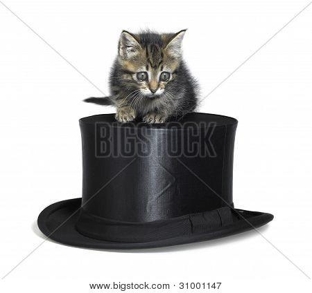 Cute Kitten On Top Hat