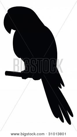 Parrot on a pole, silhouette