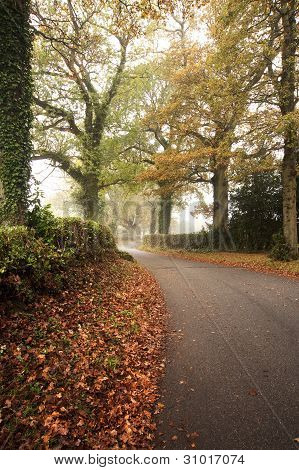 Road Winding Through Foggy Misty Autumn Forest Landscape At Dawn