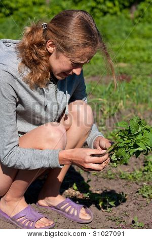 Young Woman With Tomato Seedlings In Hands