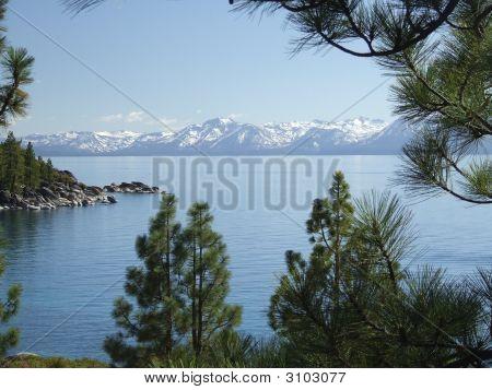 Lake Tahoe Through The Trees