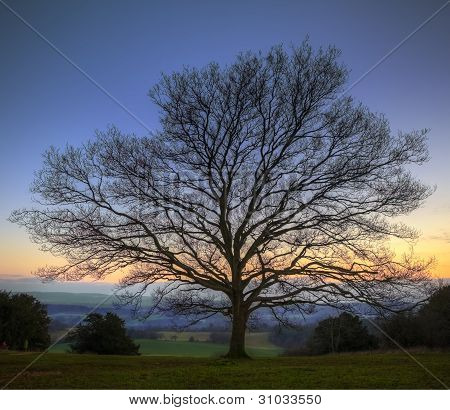 Single Bare Winter Tree Against Vibrant Sunset
