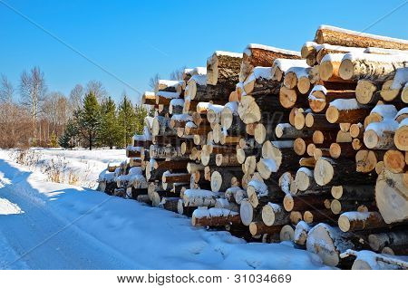Timber Pile In The Snow