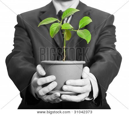 Businessman Is Holding A Plant In Pot