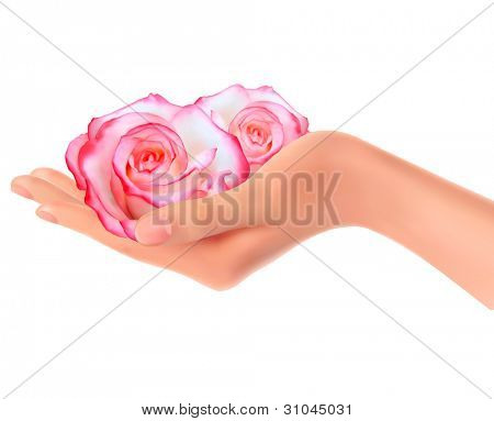 Two pink roses in a hand. Vector.