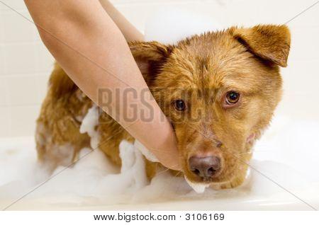 Tomar un baño de perro