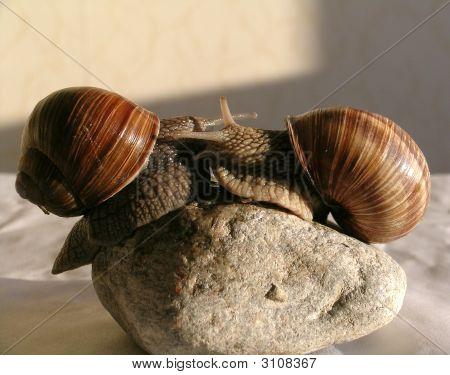Caracol de piedra casa naturaleza animal lento