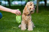 Female Hold Green Plastic Bag With Pet Turds. Picking Up Dog Poop. poster