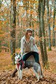 Pedigree Dog Concept. Best Friends. Unconditional Love. Girl Enjoy Walk With Husky Dog. Siberian Hus poster