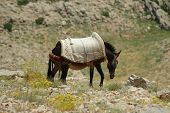 pic of euphrat  - Desert landscape with horse in Northern Kurdistan - JPG