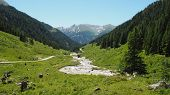 Panoramic View In A Valley With Mountain Forrest Scenery And Cows In The Alps On A Sunny Day With Bl poster