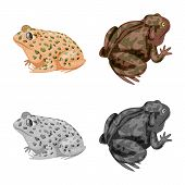 Vector Design Of Wildlife And Bog Icon. Set Of Wildlife And Reptile Vector Icon For Stock. poster