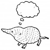 stock photo of shrew  - illustration of a cute shrew - JPG