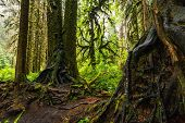Hoh Rain Forest Is Situated In Washington, United States Of America, Nature, Landscape, Background,  poster