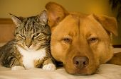 Постер, плакат: Кошка и собака