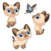 Kittens Kittens Siamese Pet Isolated Illustration Vector poster